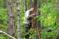 Sezonowa praca w Szwecji w szkółce leśnej – wycinka pięlęgnacja