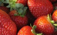 Sezonowa praca w Danii przy zbiorach owoców