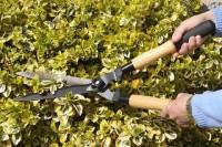 Praca dla ogrodnika w Anglii – sezonowe ogrodnictwo