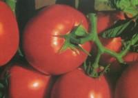 Praca sezonowa w Norwegii przy zbiorach warzyw i owoców