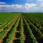 Praca na farmie we Francji – sezonowa oferta bez znajomości języka