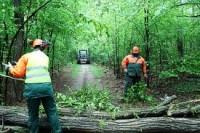 Fizyczna praca w Niemczech przy wycince drzew (w lesie)