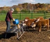 Fizyczna praca na farmie w Niemczech 2013 – dla kobiet