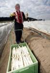 Zbiory – praca przy szparagach w Niemczech bez języka
