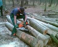 Niemcy praca w leśnictwie przy wycince 2013