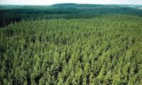Fizyczna praca w Szwecji w szkółce leśnej, przy sadzonkach