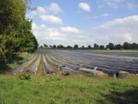 Od zaraz sezonowa praca w Niemczech przy zbiorach szparagów od kwietnia 2013