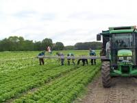 Zbiory warzyw praca w Niemczech od zaraz w rolnictwie Dortmund