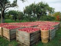 Praca Holandia w ogrodnictwie sezonowa w szklarni – sortowanie, pięlęgnacja