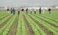 Praca Francja od zaraz przy zbiorze warzyw dla par