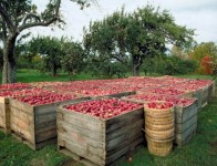 Fizyczna Sezonowa praca Niemcy zbiory jabłek, śliwek bez znajomości języka