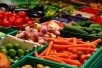 Holandia praca przy uprawie warzyw i kwiatów bez znajomości języka holenderskiego