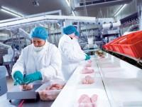Holandia praca na produkcji drobiu w Leeuwarden