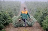Dam fizyczną pracę w Szwecji w leśnictwie sprzątanie lasów bez języka